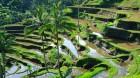 Balis Kultur und Natur