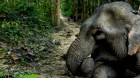 Das Reich der Millionen Elefanten