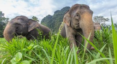Dschungelabenteuer Elephant Hills