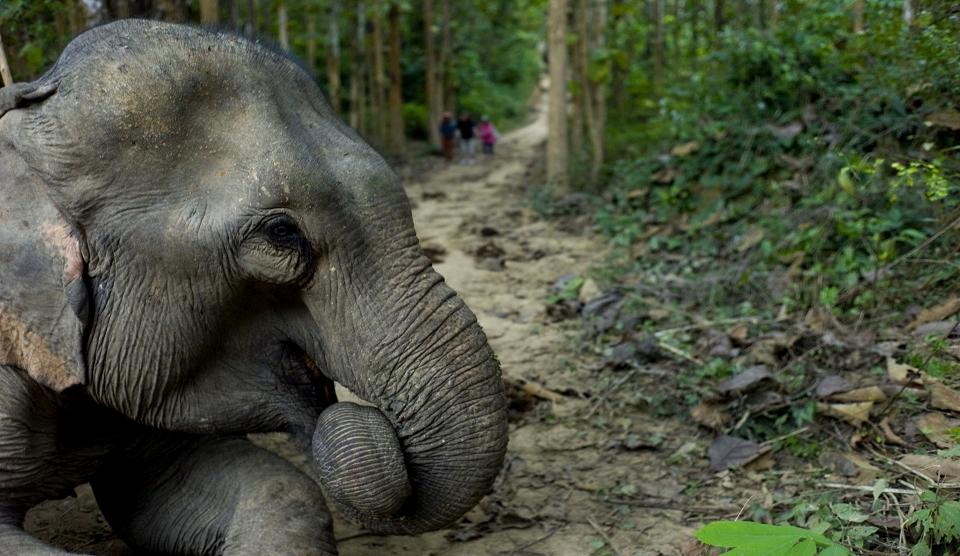 Shangri Lao - Elefantencamp