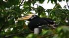 Borneo Safari